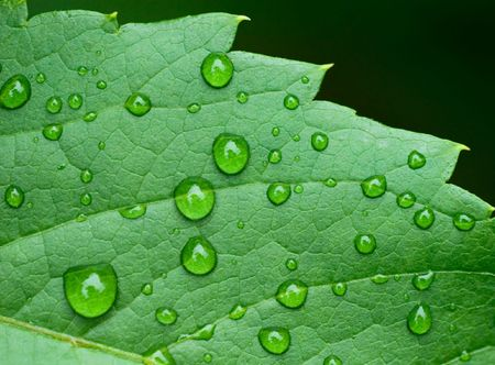 droplets on leaf - shallow focus photo