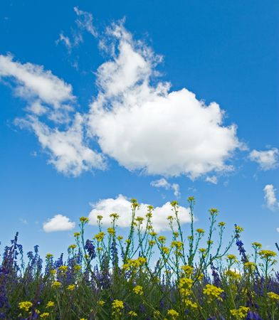 background of blooming flowers, green grass and blue sky  photo