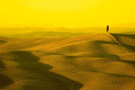 lonely cypress tree in hill - typical tuscan landscape photo