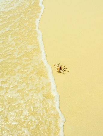 seashell in a beach Stock Photo - 1483115