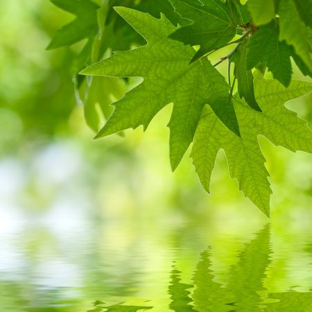 green leaves reflecting in the water, shallow focus Stock Photo - 2665236