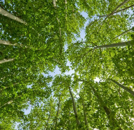 summer background of green trees Stock Photo - 2783093