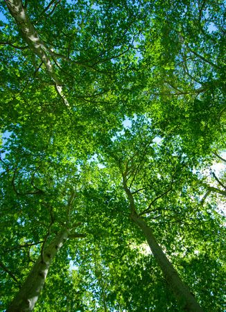 summer background of green trees photo
