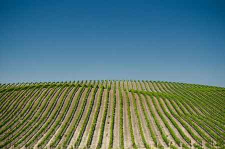 agricultu: vineyards of napa valley, usa  Stock Photo