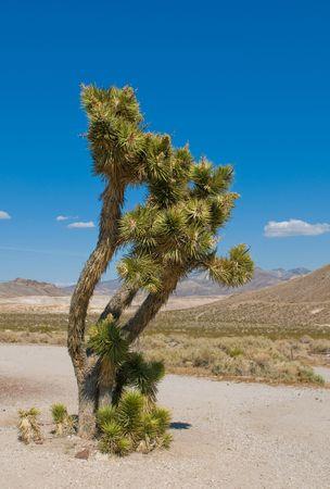 southwest usa: Joshua tree, California, Southwest USA
