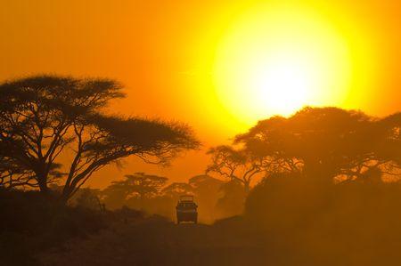 safari jeep driving through savannah in the sunset photo
