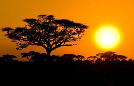 savanna: african sunset in savannah, kenya Stock Photo