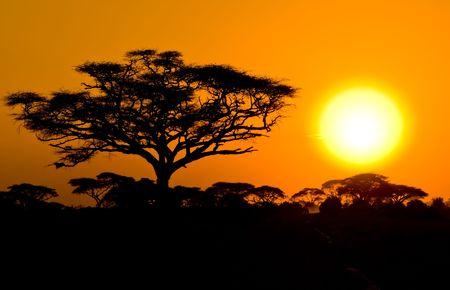 afrikanischen Sonnenuntergang in Savannah, Kenia