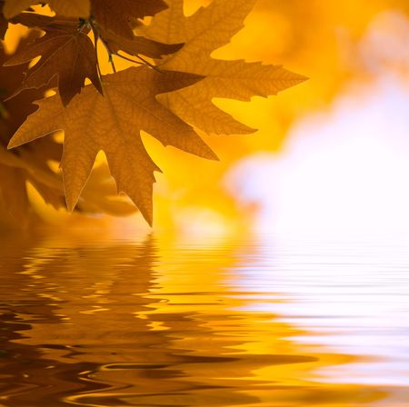 autumn leaves, very shallow focus photo