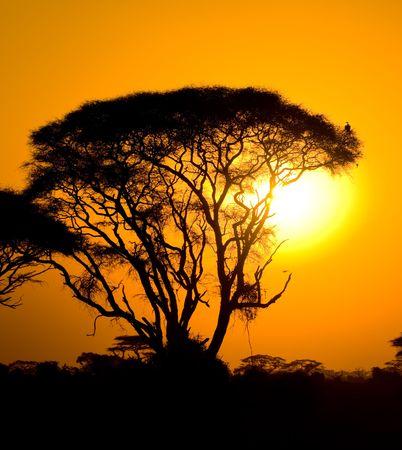 african sunset in savannah, kenya Imagens