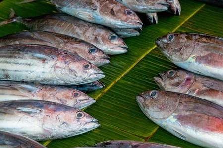 fishy: fresh fish at a fish market