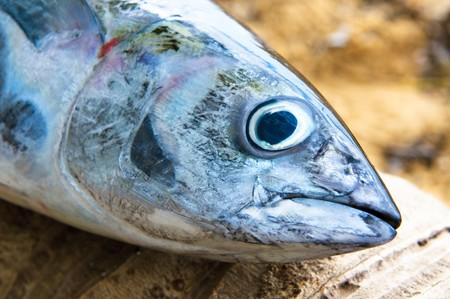 head of tuna fish at a fish market Stock Photo - 4003453