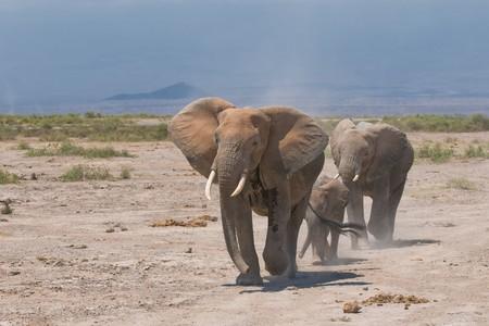 amboseli: elephants family, amboseli, kenya