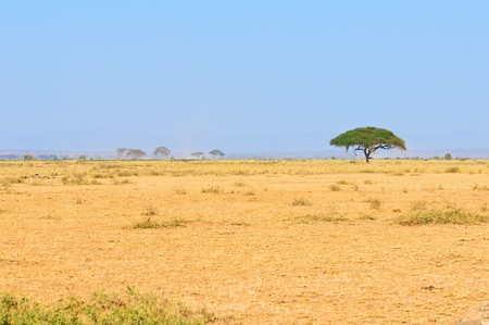 savanna: tree in savannah, typical african landscape Stock Photo
