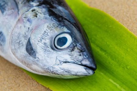 head of tuna fish at a fish market photo