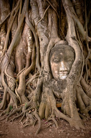 buddhas head in banyan tree roots, ayuthaya, thailand photo