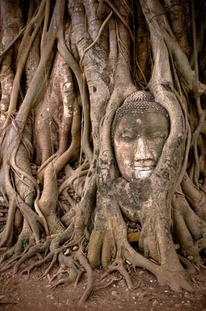 buddhas head in banyan tree roots, ayuthaya, thailand photo