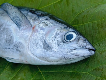 fishy: head of tuna fish at a fish market