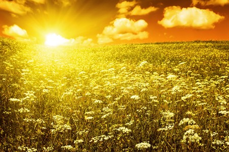 green field with blooming flowers and red sky Stock Photo - 4227699