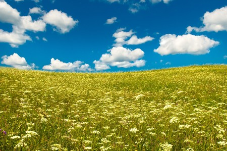 green field with blooming flowers and blue sky Stock Photo - 4227704
