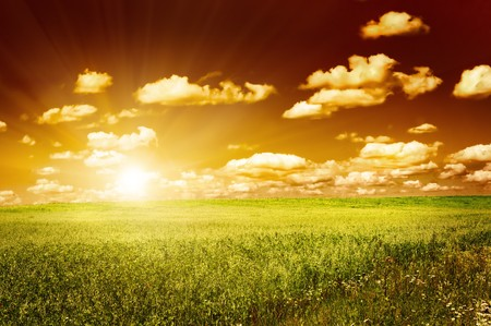 green field with blooming flowers and red sky Stock Photo - 4266351
