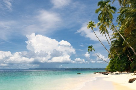 tropical island - sea, sky and palm trees photo