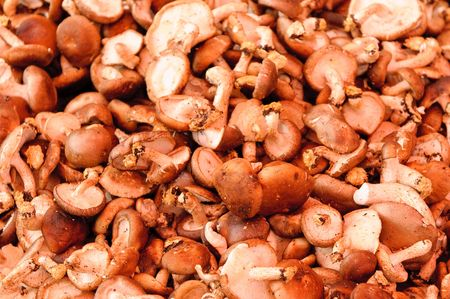 mushrooms in the market photo