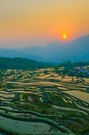 terracing: rice terraces of yuanyang,  yunnan, china
