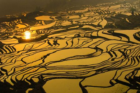 gradas: terrazas de arroz de yuanyang, Yunnan, China