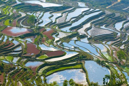 provinces: rice terraces of yuanyang,  yunnan, china