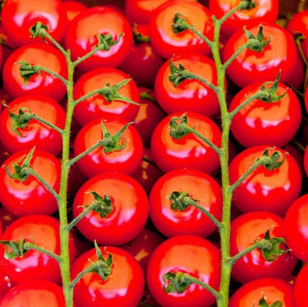 bunchy: red tomatoes