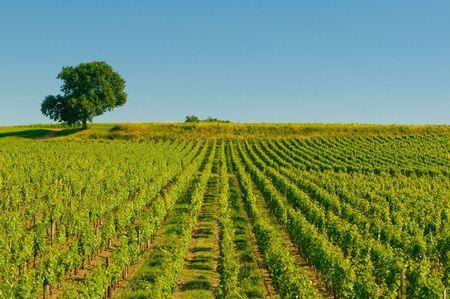 wijn gaarden in bordeaux