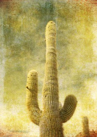 incahuasi: image of cactus over vintage paper Stock Photo