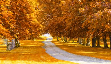 road autumnal: autumnal alley