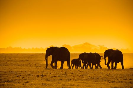 silhouettes of elephants, amboseli national park, kenya photo