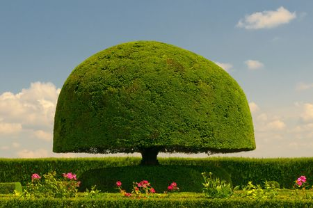 shaped: mushroom shaped tree