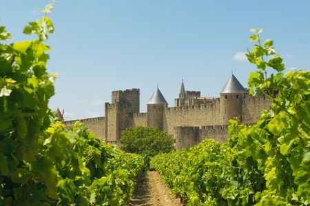 fortified: Medieval town of Carcassonne and vineyards
