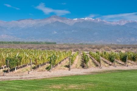 andes mountain: Vineyards of Mendoza, Argentina