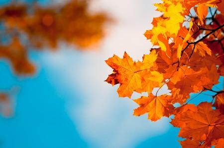 Herbst Laub, sehr flach Fokus  Standard-Bild - 7929259