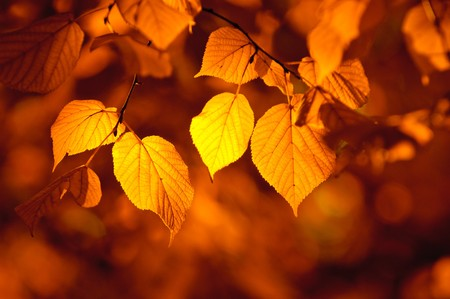 feuilles d'automne, de discussion tr?peu profonde Banque d'images