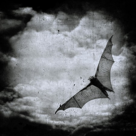 bat in the dark cloudy sky, perfect halloween background Stock Photo - 7970633