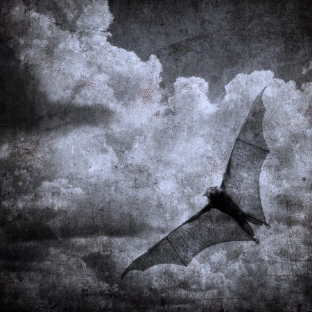 bat in the dark cloudy sky, perfect halloween background Stock Photo - 7970757