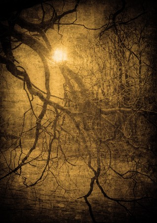 grunge image of dark forest, perfect halloween background Stock Photo - 7970808