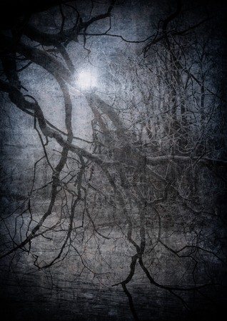 grunge image of dark forest, perfect halloween background photo