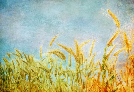 Grunge image of wheat field photo