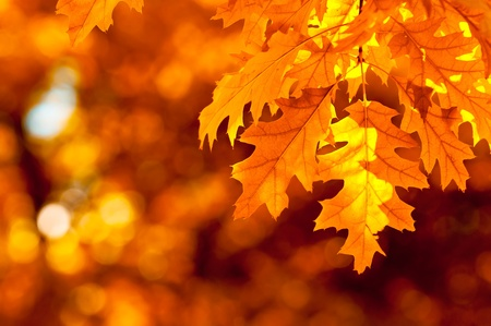 fall background: autumn leaves, very shallow focus Stock Photo