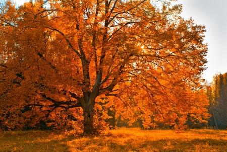 autumn scene: Autumn tree