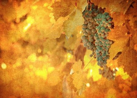 vine leaves: vintage image of grape Stock Photo