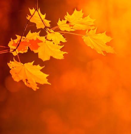 falls: autumn leaves, very shallow focus Stock Photo