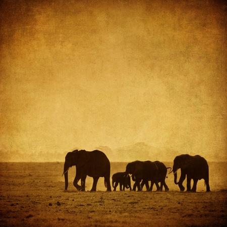 silhouettes elephants: familia elefante, Amboseli, Kenia